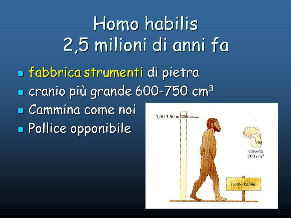 Homo habilis 2,5 milioni di anni fa fabbrica strumenti di pietra fabbrica strumenti di pietra cranio più grande 600-750 cm 3 cranio più grande 600-750 cm 3 Cammina come noi Cammina come noi Pollice opponibile Pollice opponibile