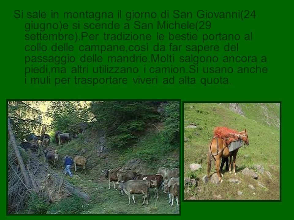Si sale in montagna il giorno di San Giovanni(24 giugno)e si scende a San Michele(29 settembre).Per tradizione le bestie portano al collo delle campan