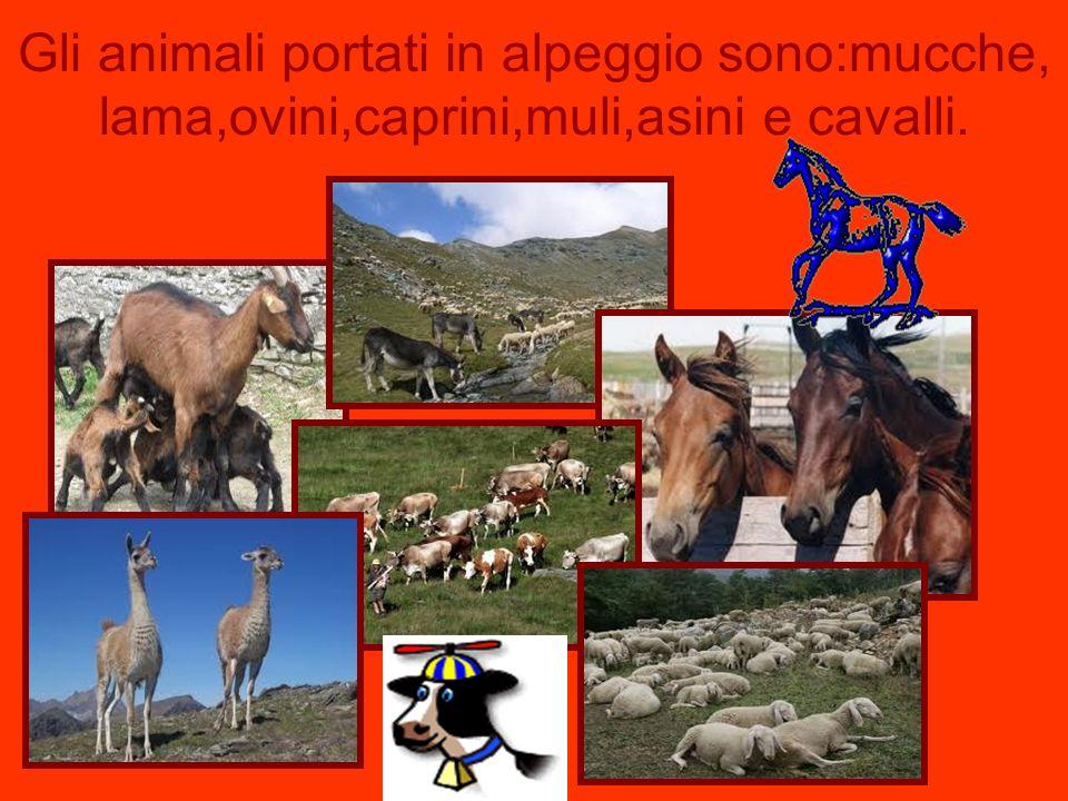Gli animali portati in alpeggio sono:mucche, lama,ovini,caprini,muli,asini e cavalli.