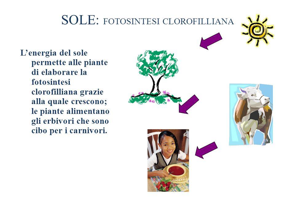 SOLE: FOTOSINTESI CLOROFILLIANA Lenergia del sole permette alle piante di elaborare la fotosintesi clorofilliana grazie alla quale crescono; le piante