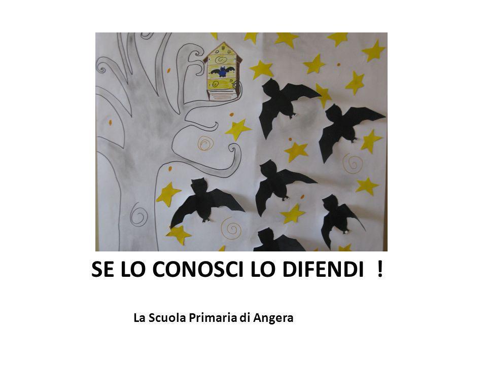 La Scuola Primaria di Angera SE LO CONOSCI LO DIFENDI !