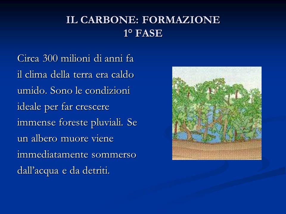 IL CARBONE: FORMAZIONE 1° FASE Circa 300 milioni di anni fa il clima della terra era caldo umido. Sono le condizioni ideale per far crescere immense f