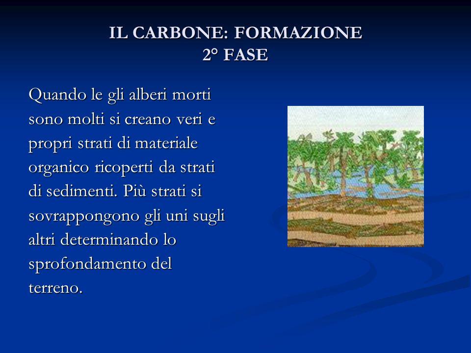 IL CARBONE: FORMAZIONE 3° FASE Il materiale organico in assenza di ossigeno e grazie alla presenza di batteri comincia a decomporsi.