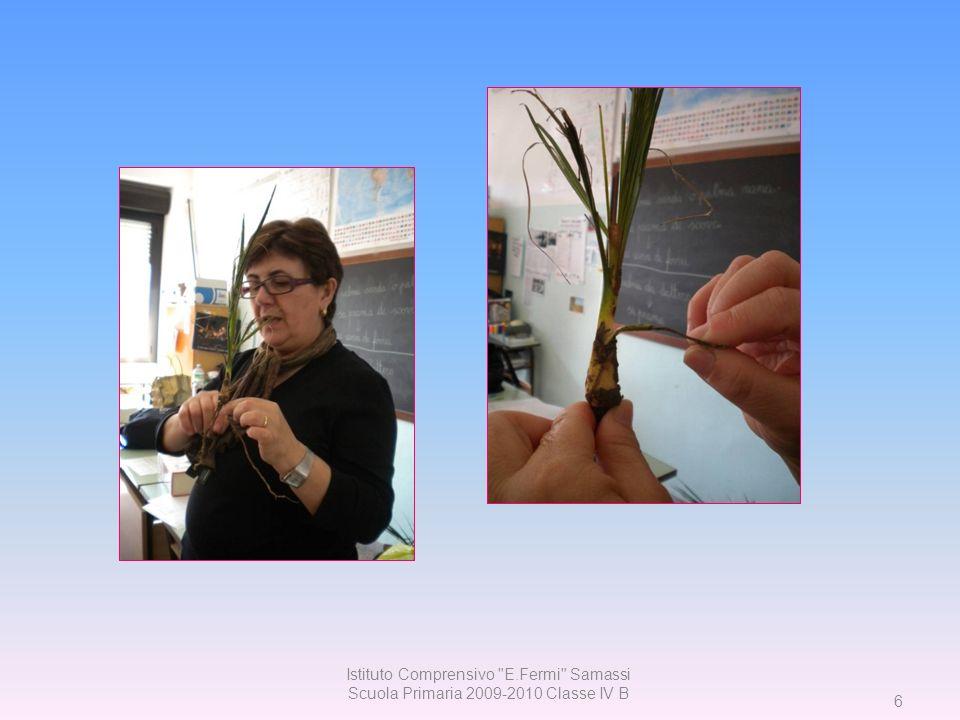 47 Istituto Comprensivo E. Fermi Samassi Scuola Primaria 2009-2010 Classe IV B
