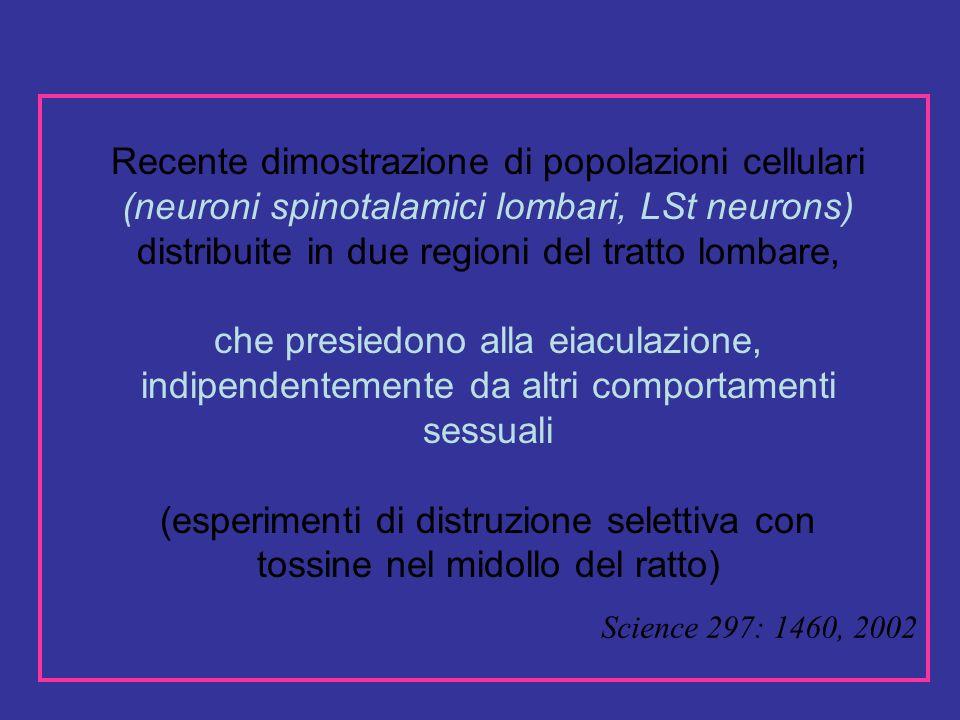 Science 297: 1460, 2002 Recente dimostrazione di popolazioni cellulari (neuroni spinotalamici lombari, LSt neurons) distribuite in due regioni del tratto lombare, che presiedono alla eiaculazione, indipendentemente da altri comportamenti sessuali (esperimenti di distruzione selettiva con tossine nel midollo del ratto)
