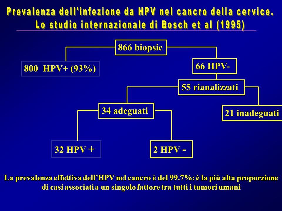 866 biopsie 800 HPV+ (93%) 66 HPV- 55 rianalizzati 21 inadeguati 34 adeguati 32 HPV + 2 HPV - La prevalenza effettiva dellHPV nel cancro è del 99.7%:
