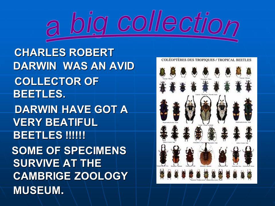 CHARLES ROBERT DARWIN WAS AN AVID CHARLES ROBERT DARWIN WAS AN AVID COLLECTOR OF BEETLES. COLLECTOR OF BEETLES. DARWIN HAVE GOT A VERY BEATIFUL BEETLE