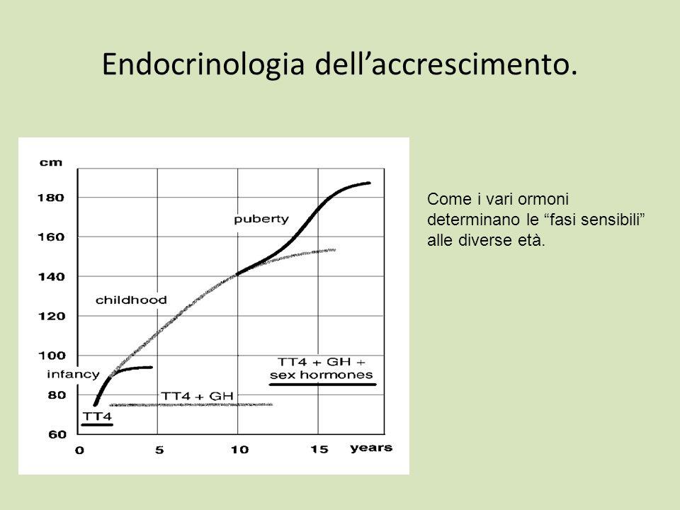 Endocrinologia dellaccrescimento. Come i vari ormoni determinano le fasi sensibili alle diverse età.