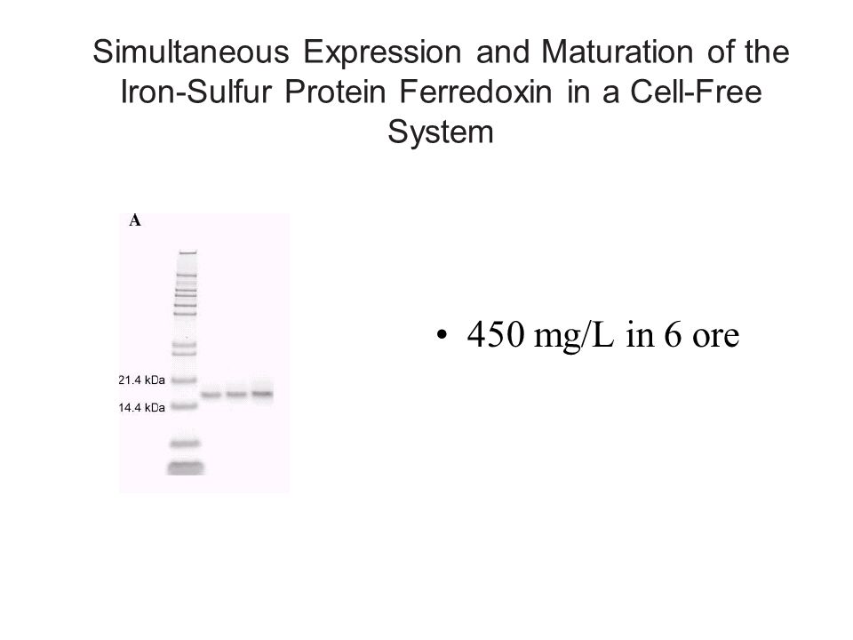 Simultaneous Expression and Maturation of the Iron-Sulfur Protein Ferredoxin in a Cell-Free System 450 mg/L in 6 ore