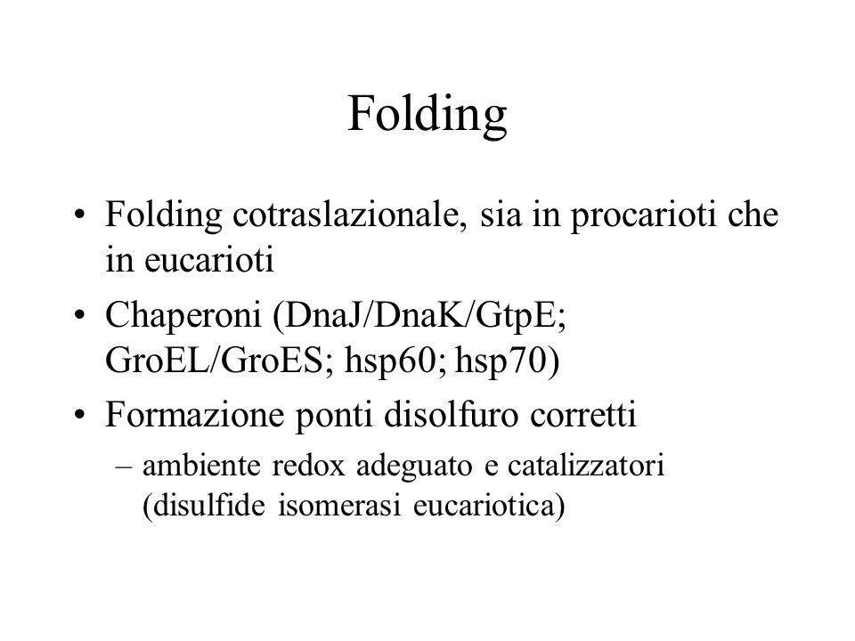 Folding Folding cotraslazionale, sia in procarioti che in eucarioti Chaperoni (DnaJ/DnaK/GtpE; GroEL/GroES; hsp60; hsp70) Formazione ponti disolfuro c