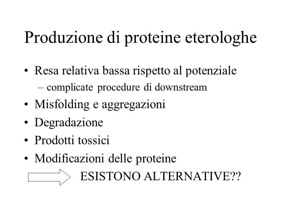 Produzione di proteine eterologhe Resa relativa bassa rispetto al potenziale –complicate procedure di downstream Misfolding e aggregazioni Degradazion