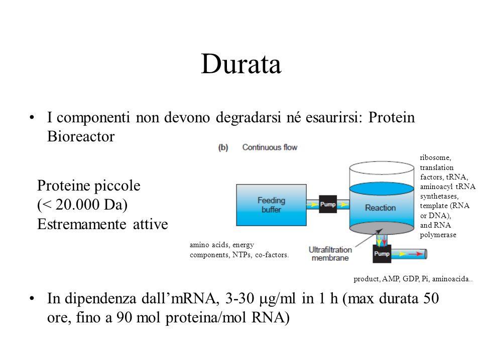 Durata I componenti non devono degradarsi né esaurirsi: Protein Bioreactor In dipendenza dallmRNA, 3-30 g/ml in 1 h (max durata 50 ore, fino a 90 mol