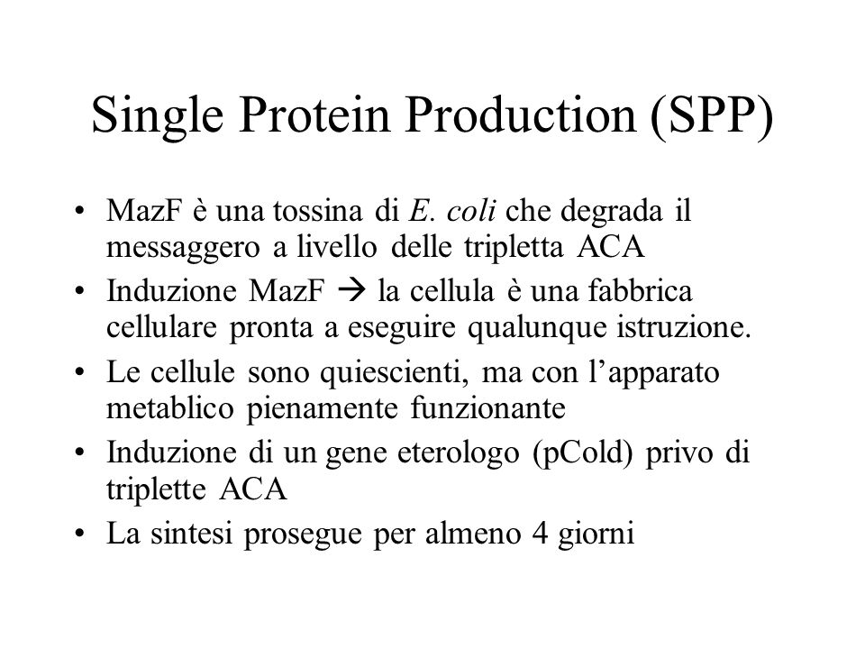 Single Protein Production (SPP) MazF è una tossina di E. coli che degrada il messaggero a livello delle tripletta ACA Induzione MazF la cellula è una