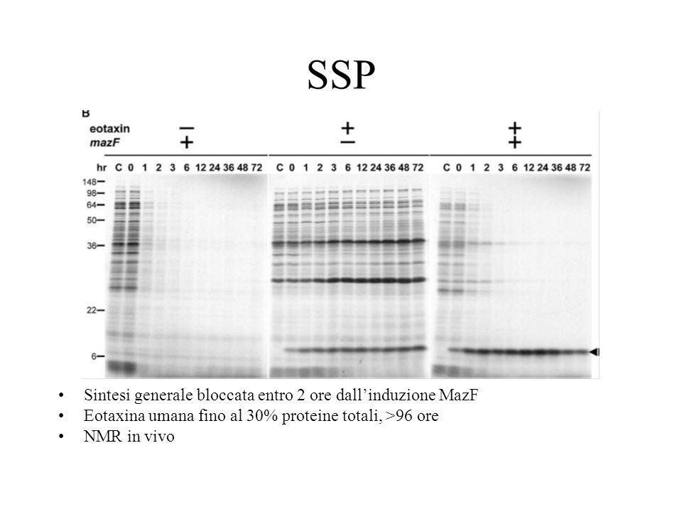 SSP Sintesi generale bloccata entro 2 ore dallinduzione MazF Eotaxina umana fino al 30% proteine totali, >96 ore NMR in vivo