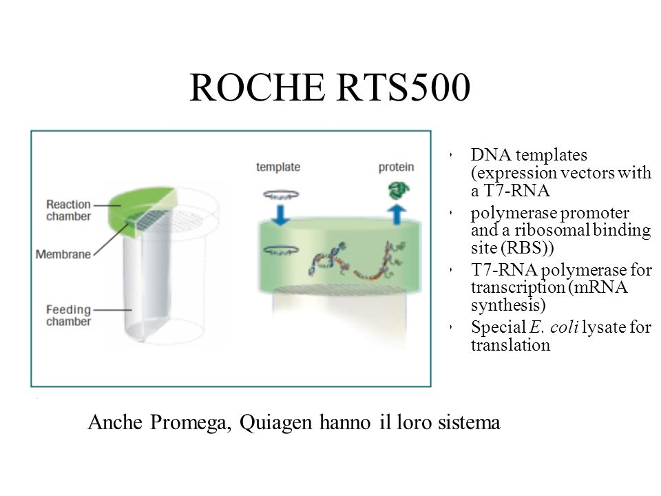 ROCHE RTS500 DNA templates (expression vectors with a T7-RNA polymerase promoter and a ribosomal binding site (RBS)) T7-RNA polymerase for transcripti
