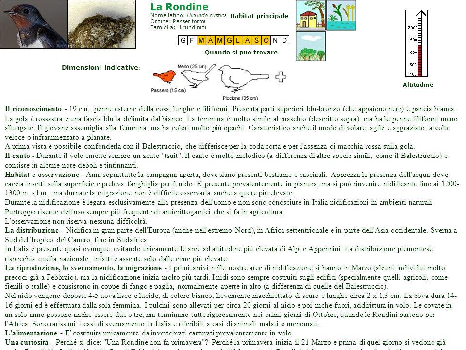 Il microfono Il sonogramma Mini ricerche sugli uccelli Strumentazione