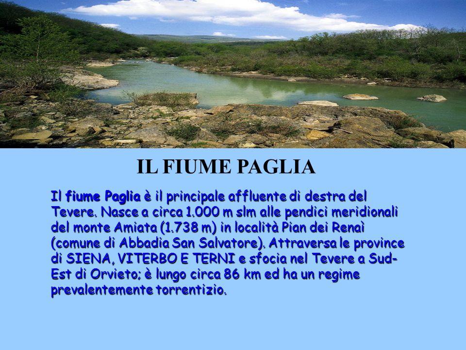 IL FIUME PAGLIA Il fiume Paglia è il principale affluente di destra del Tevere.