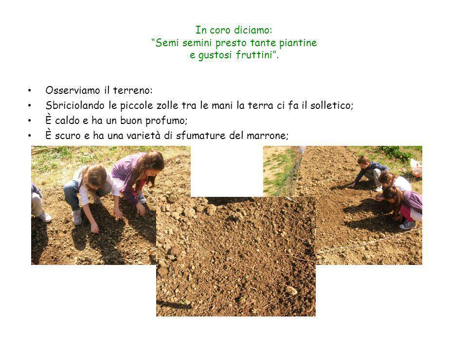 In coro diciamo: Semi semini presto tante piantine e gustosi fruttini. Osserviamo il terreno: Sbriciolando le piccole zolle tra le mani la terra ci fa