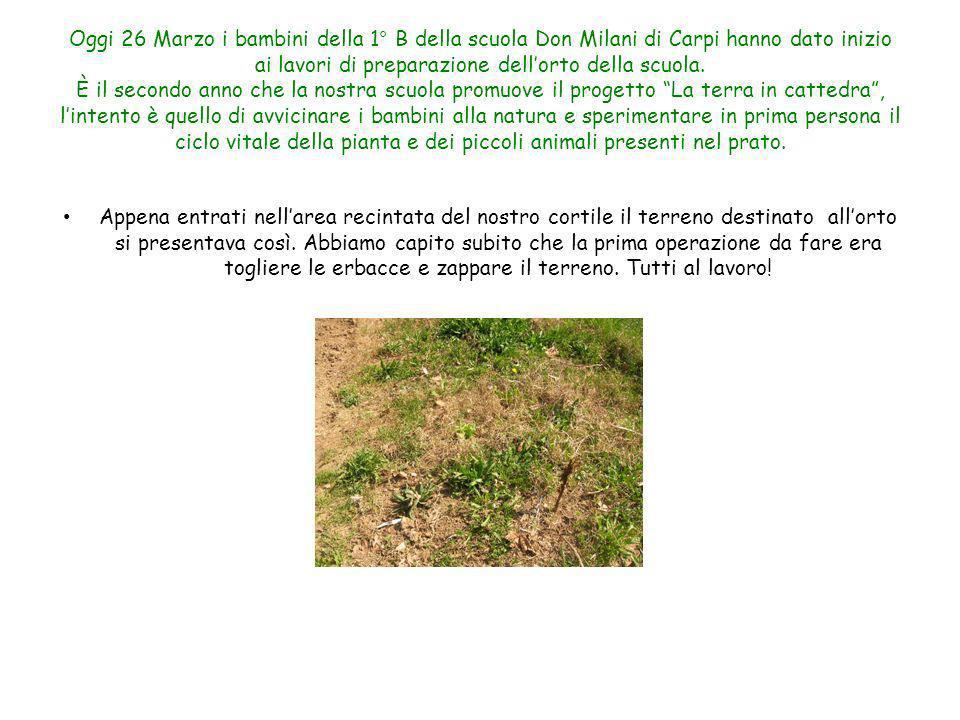 Oggi 26 Marzo i bambini della 1° B della scuola Don Milani di Carpi hanno dato inizio ai lavori di preparazione dellorto della scuola. È il secondo an