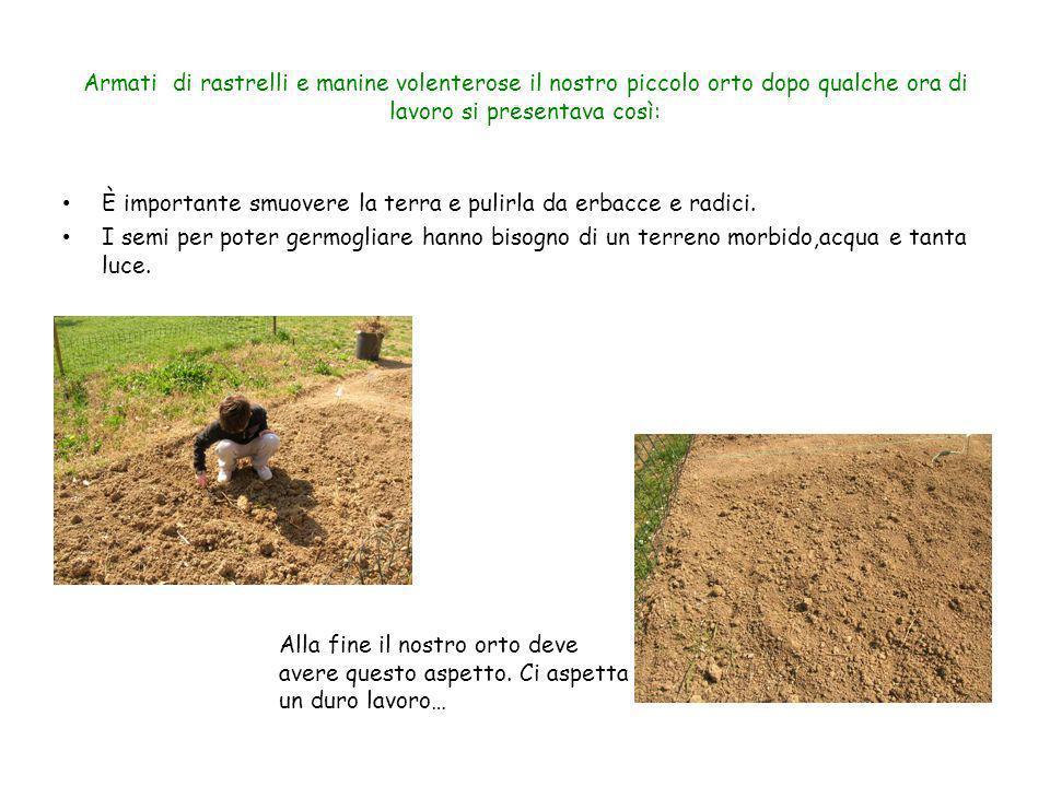 Armati di rastrelli e manine volenterose il nostro piccolo orto dopo qualche ora di lavoro si presentava così: È importante smuovere la terra e pulirl