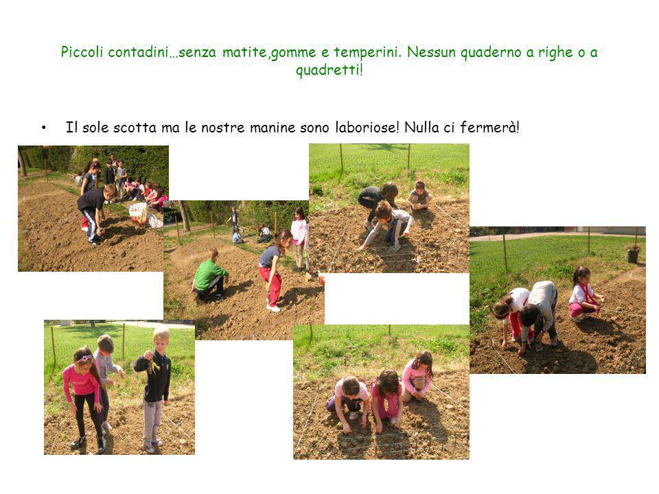 Piccoli contadini…senza matite,gomme e temperini. Nessun quaderno a righe o a quadretti! Il sole scotta ma le nostre manine sono laboriose! Nulla ci f