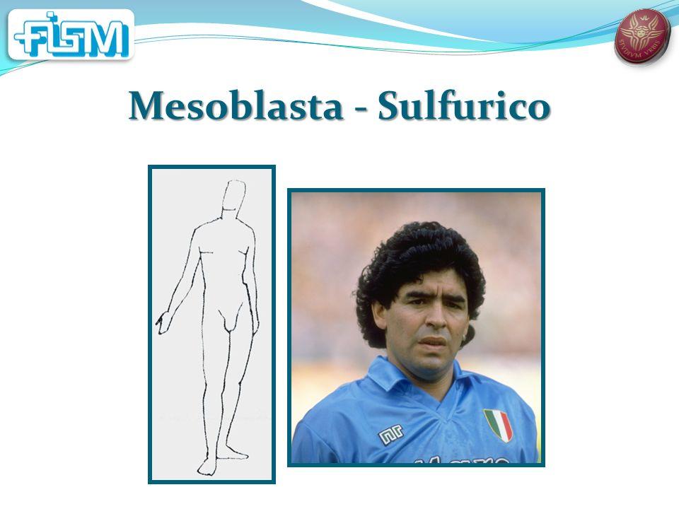 Mesoblasta - Sulfurico