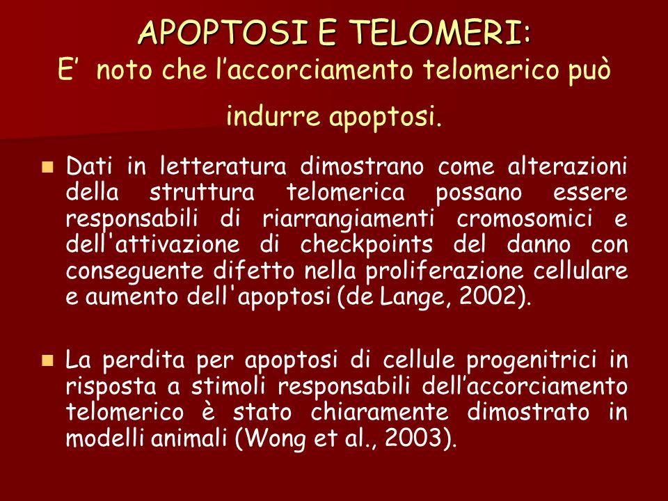 APOPTOSI E TELOMERI: APOPTOSI E TELOMERI: E noto che laccorciamento telomerico può indurre apoptosi. Dati in letteratura dimostrano come alterazioni d