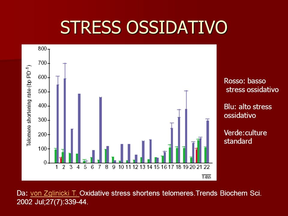 STRESS OSSIDATIVO Da: von Zglinicki T. Oxidative stress shortens telomeres.Trends Biochem Sci. 2002 Jul;27(7):339-44. von Zglinicki T. Rosso: basso st