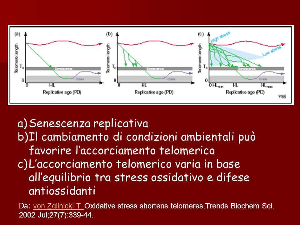 a)Senescenza replicativa b)Il cambiamento di condizioni ambientali può favorire laccorciamento telomerico c)Laccorciamento telomerico varia in base al