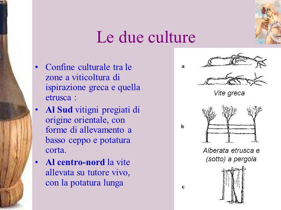 Le due culture Confine culturale tra le zone a viticoltura di ispirazione greca e quella etrusca : Al Sud vitigni pregiati di origine orientale, con f