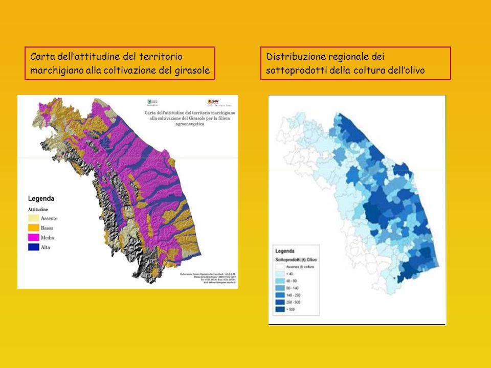 Carta dellattitudine del territorio marchigiano alla coltivazione del girasole Distribuzione regionale dei sottoprodotti della coltura dellolivo