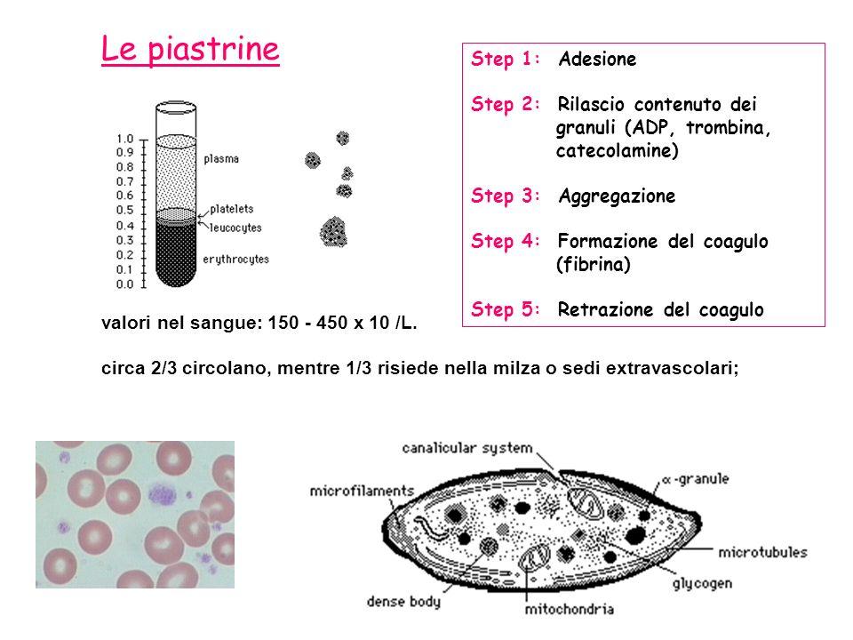 valori nel sangue: 150 - 450 x 10 /L. circa 2/3 circolano, mentre 1/3 risiede nella milza o sedi extravascolari; Le piastrine Step 1: Adesione Step 2:
