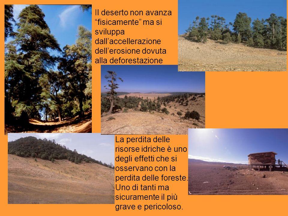 Il deserto non avanza fisicamente ma si sviluppa dallaccellerazione dellerosione dovuta alla deforestazione La perdita delle risorse idriche è uno deg
