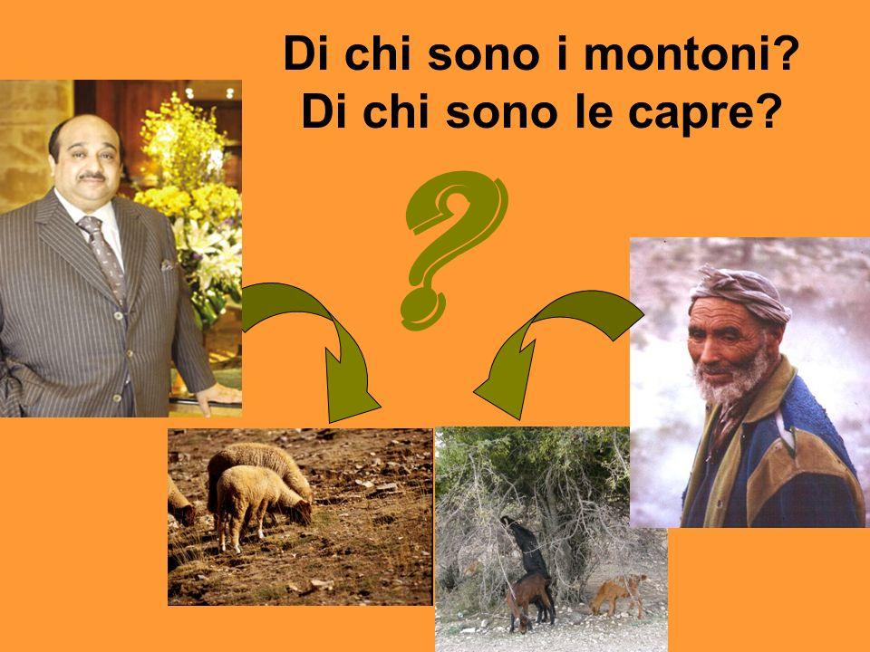 Di chi sono i montoni? Di chi sono le capre? ?