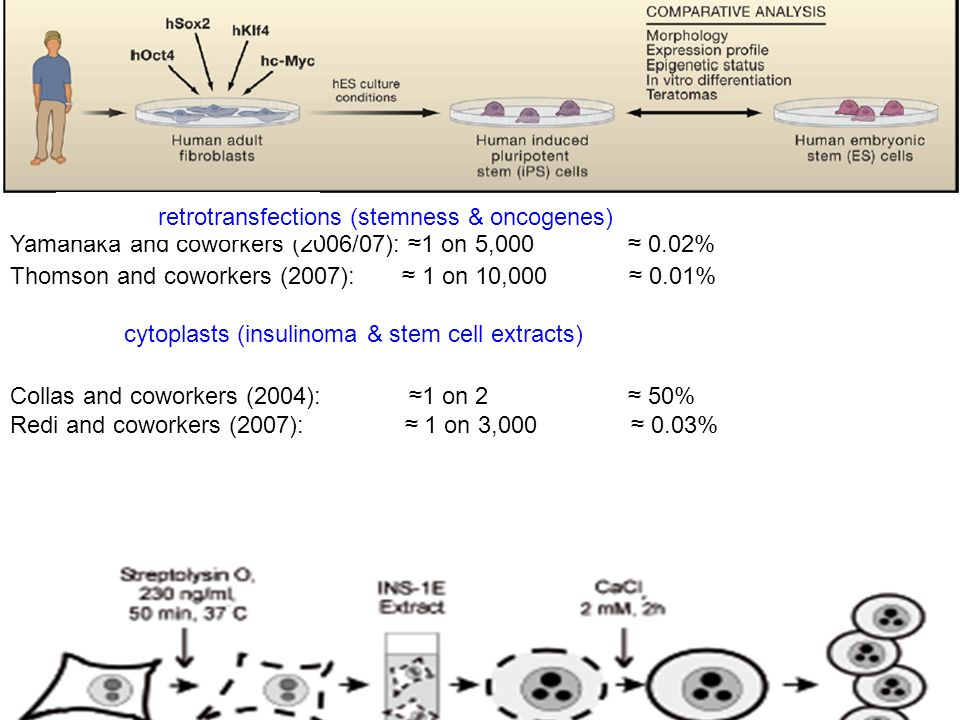 Yamanaka and coworkers (2006/07): 1 on 5,000 0.02% Thomson and coworkers (2007): 1 on 10,000 0.01% cytoplasts (insulinoma & stem cell extracts) Collas
