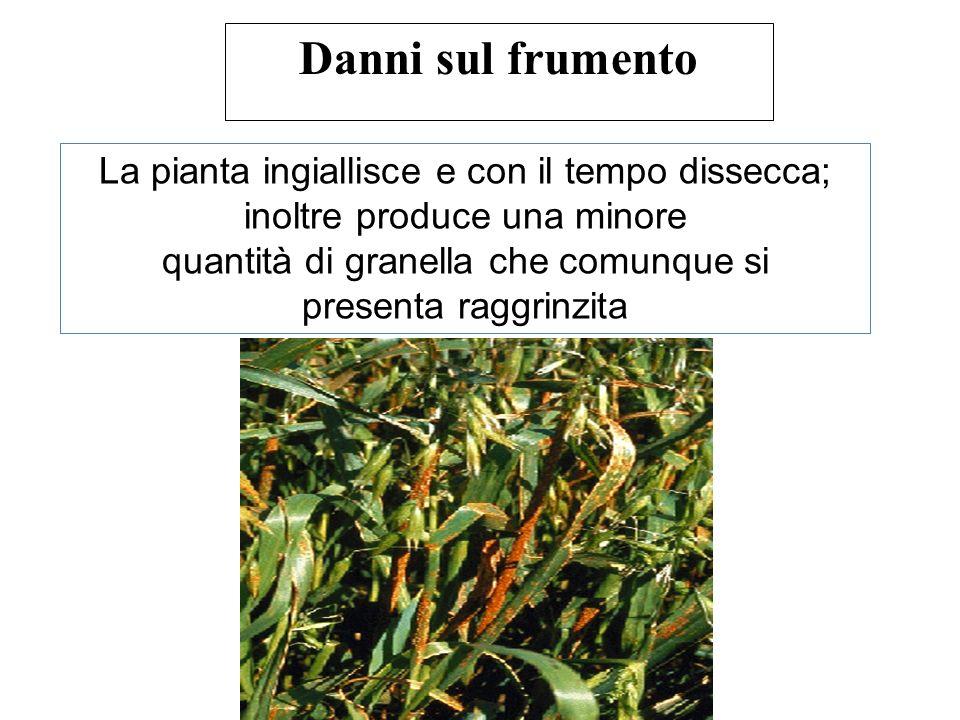 Ciclo biologico completo Crespino (berberis sp.)