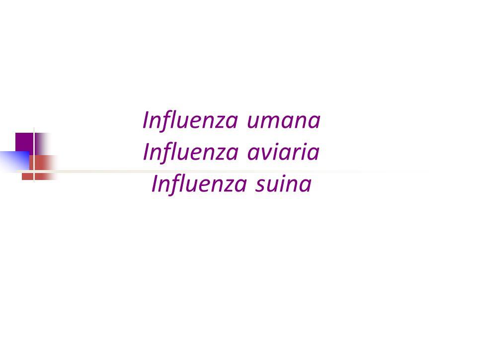 Influenza umana Influenza aviaria Influenza suina