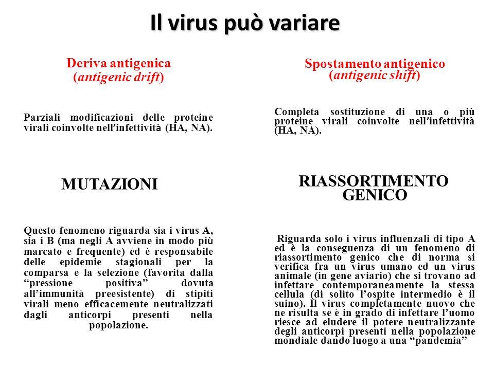 Il virus può variare Deriva antigenica (antigenic drift) Parziali modificazioni delle proteine virali coinvolte nell infettivit à (HA, NA). MUTAZIONI