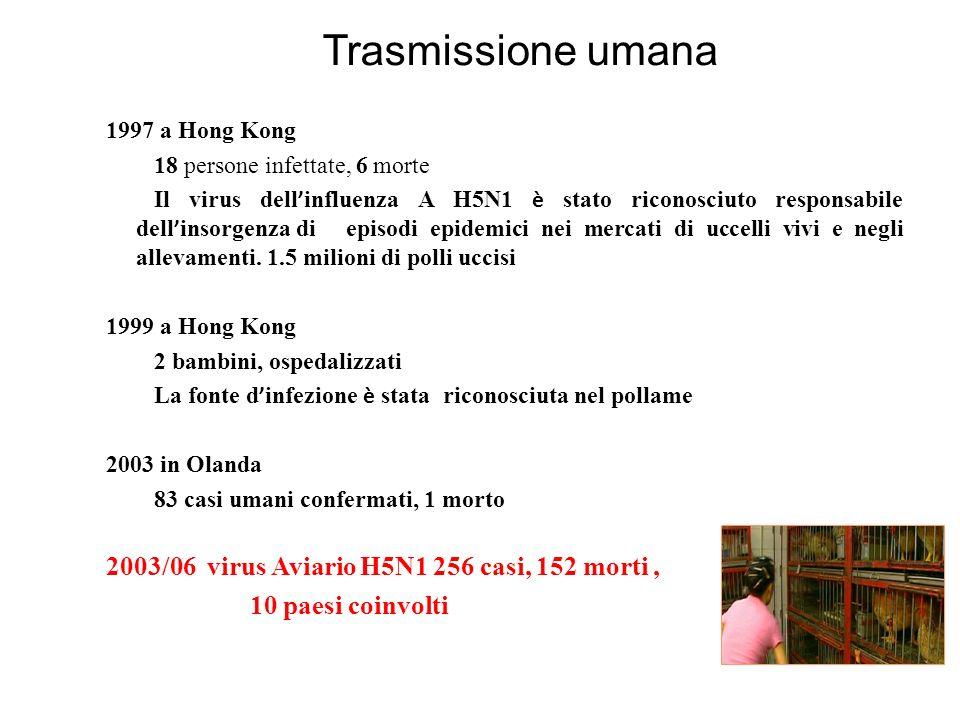 Trasmissione umana 1997 a Hong Kong 18 persone infettate, 6 morte Il virus dell influenza A H5N1 è stato riconosciuto responsabile dell insorgenza di