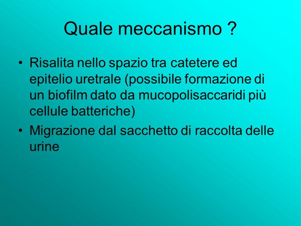 Quale meccanismo ? Risalita nello spazio tra catetere ed epitelio uretrale (possibile formazione di un biofilm dato da mucopolisaccaridi più cellule b