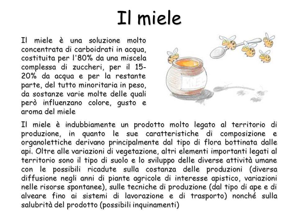 Il miele Il miele è una soluzione molto concentrata di carboidrati in acqua, costituita per l 80% da una miscela complessa di zuccheri, per il 15- 20% da acqua e per la restante parte, del tutto minoritaria in peso, da sostanze varie molte delle quali però influenzano colore, gusto e aroma del miele Il miele è indubbiamente un prodotto molto legato al territorio di produzione, in quanto le sue caratteristiche di composizione e organolettiche derivano principalmente dal tipo di flora bottinata dalle api.