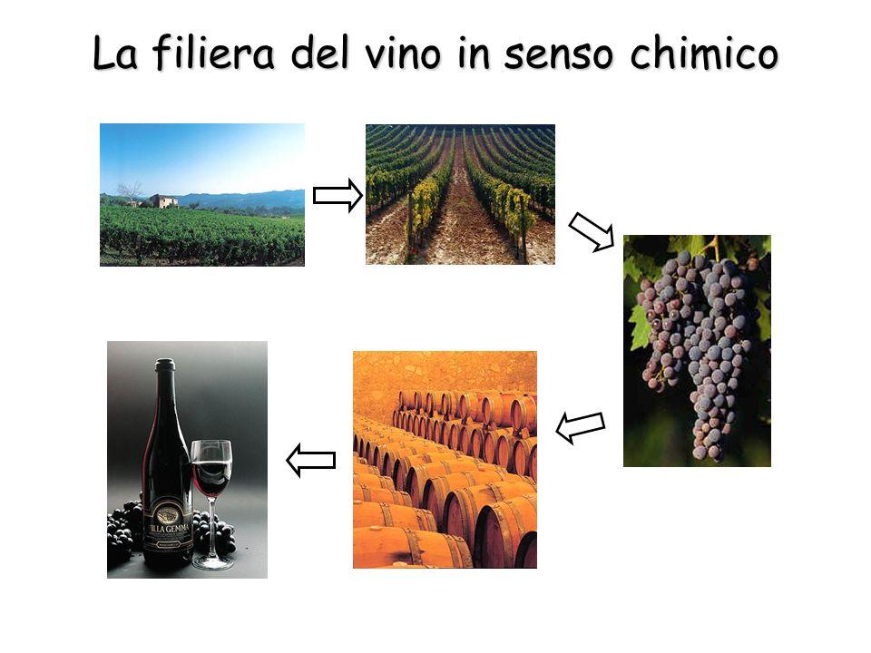 La filiera del vino in senso chimico