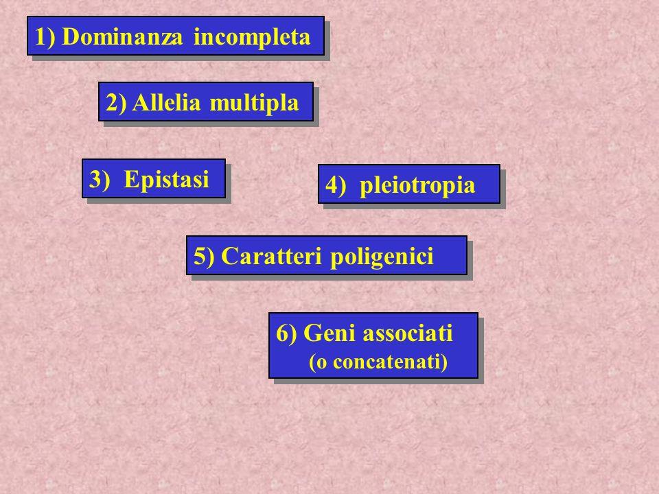 6) Geni associati (o concatenati) 6) Geni associati (o concatenati) 5) Caratteri poligenici 3) Epistasi 4) pleiotropia 2) Allelia multipla 1) Dominanz