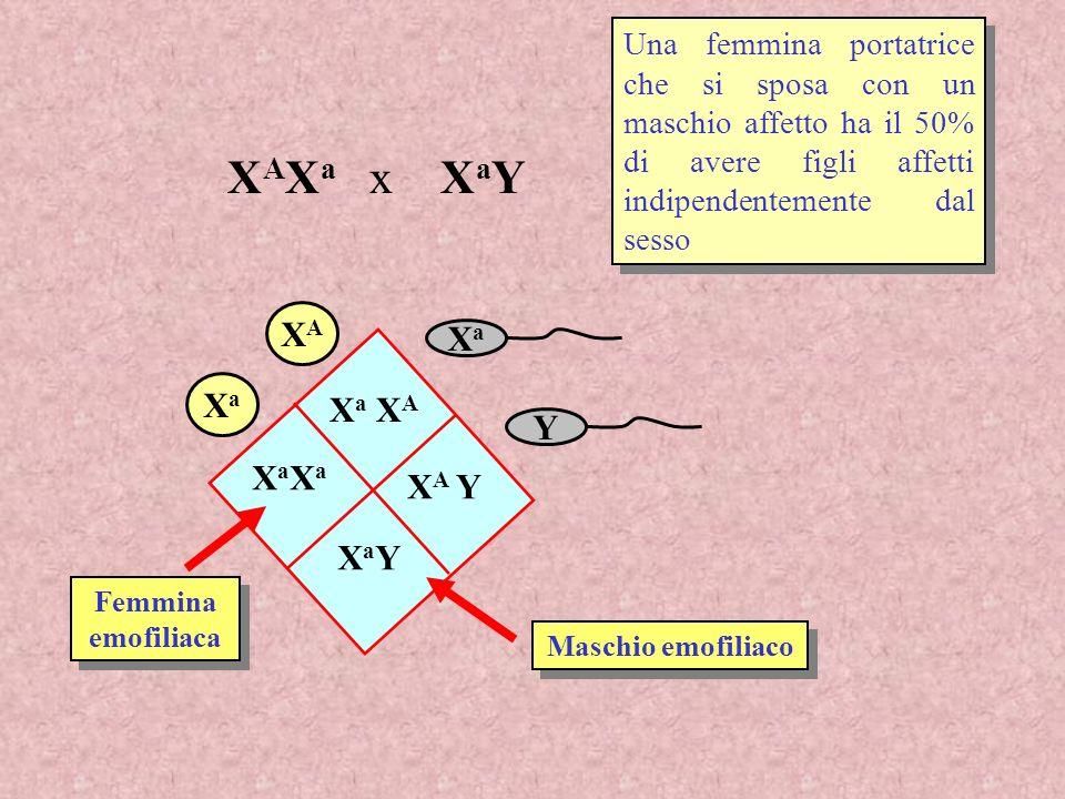 Una femmina portatrice che si sposa con un maschio affetto ha il 50% di avere figli affetti indipendentemente dal sesso XaXa Y XAXA XaXa X a X A XaXaX