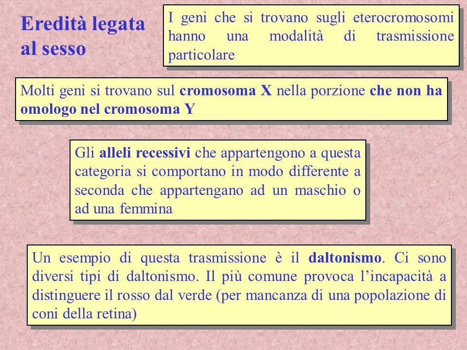 X X Nella femmina lespressione del daltonismo è simile a quella dei caratteri autosomici Essendo recessivo la presenza di una copia dellallele per il daltonismo non da alcuna manifestazione fenotipica Perché una femmina manifesti daltonismo deve essere omozigote recessivo (molto raro) Allele per il daltonismo