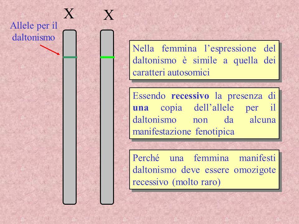 X X Nella femmina lespressione del daltonismo è simile a quella dei caratteri autosomici Essendo recessivo la presenza di una copia dellallele per il