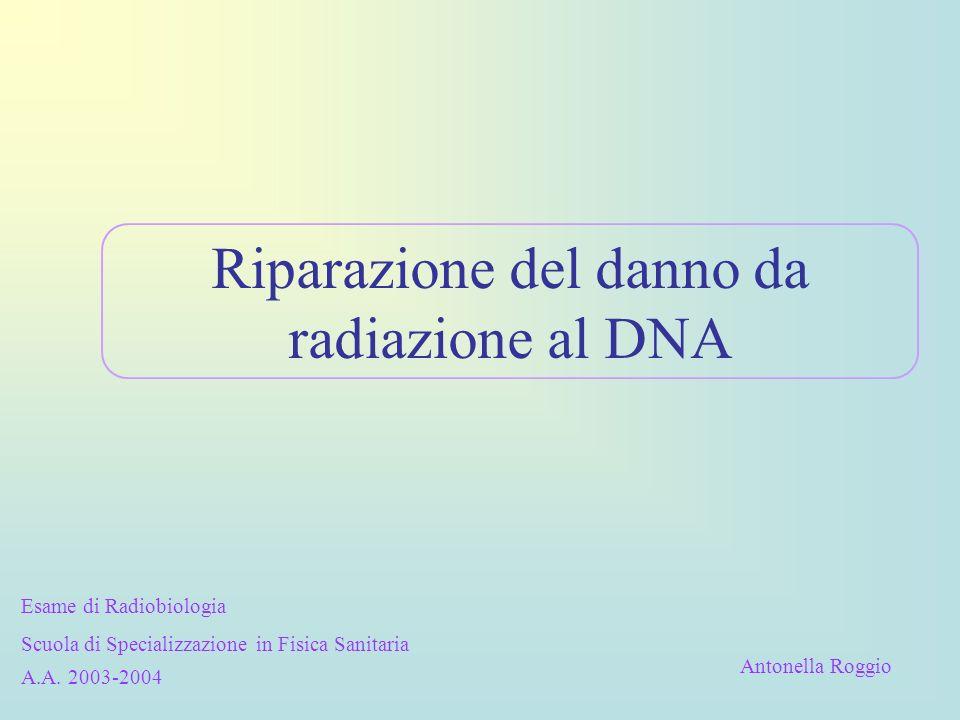 Riparazione del danno da radiazione al DNA Esame di Radiobiologia Scuola di Specializzazione in Fisica Sanitaria A.A. 2003-2004 Antonella Roggio
