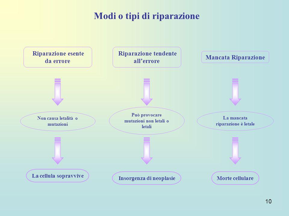 10 Modi o tipi di riparazione Riparazione esente da errore Riparazione tendente allerrore Mancata Riparazione Non causa letalità o mutazioni Può provo