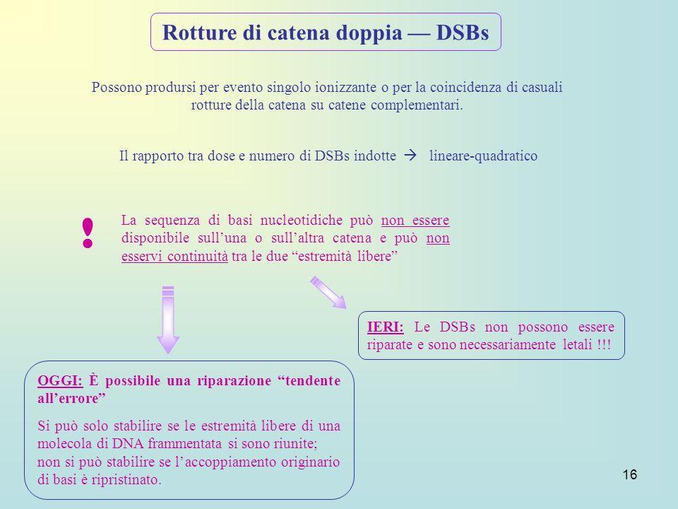 16 Rotture di catena doppia DSBs Il rapporto tra dose e numero di DSBs indotte lineare-quadratico Possono prodursi per evento singolo ionizzante o per