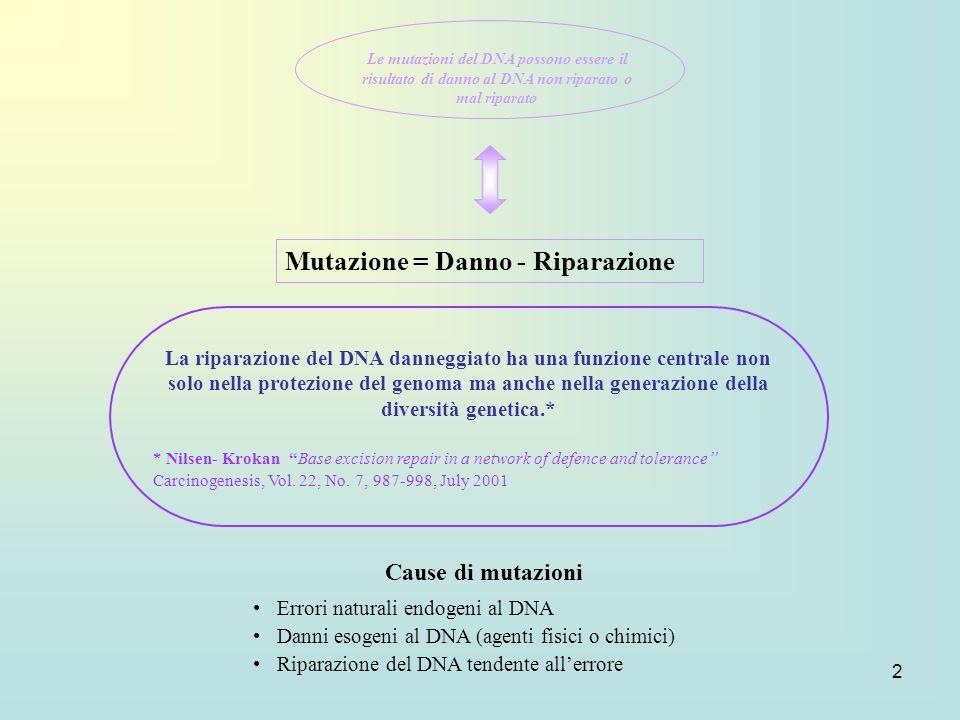 2 Mutazione = Danno - Riparazione Cause di mutazioni Errori naturali endogeni al DNA Danni esogeni al DNA (agenti fisici o chimici) Riparazione del DN